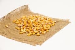 Corn beans Royalty Free Stock Photos