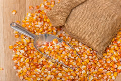 Corn beans Stock Photography