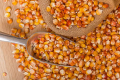 Corn beans Stock Images