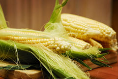 Corn. The Beautiful summer delicated corn Royalty Free Stock Photography