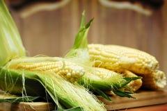 Corn. The Beautiful summer delicated corn Stock Photos