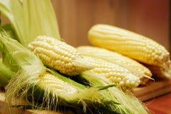 Corn. The Beautiful summer delicated corn Stock Image