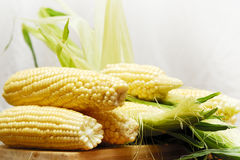Corn. The Beautiful summer delicated corn Royalty Free Stock Photo