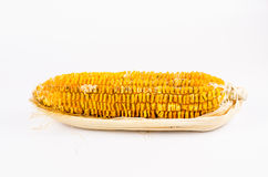 Corn became rotten with mold. Isolated on white background Royalty Free Stock Images