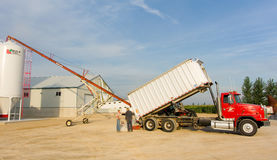 Corn being transferred to a silo Stock Image