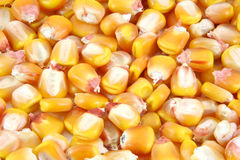 Corn berrys Royalty Free Stock Image