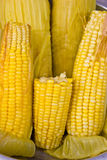 Corn Boil. Fresh corn cobs in pot stock photos