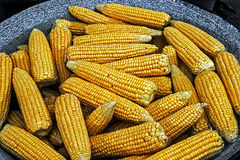 Corn boiled in a large pot royalty free stock image