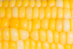 Corn. Boiled yellow corn cob one Royalty Free Stock Photos
