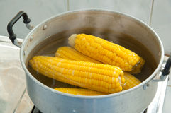 Corn boiling Stock Photography