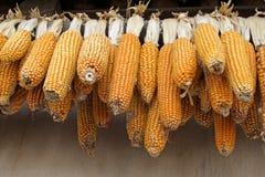 Corn bonzi Royalty Free Stock Images