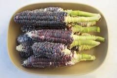 Corn Bowl Stock Photos