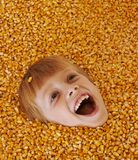 Corn boy royalty free stock photo