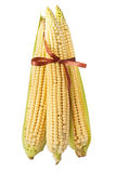 Corn with brown bow isolated on a white Stock Image