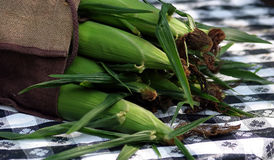 Corn In Burlap. Corn in a burlap bag on a picnic table Royalty Free Stock Photos