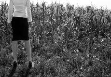 Corn business Royalty Free Stock Photo