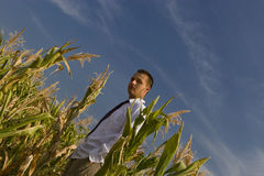 Corn business Stock Images