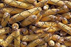 Corn cage Stock Photos