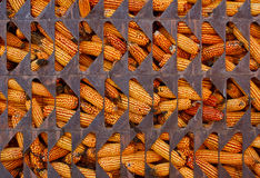 Corn in cage Royalty Free Stock Photos