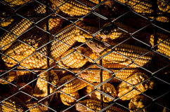 Corn in cage. Multiple corn in a cage with wires Stock Photography