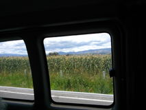 Corn from a car larger sight. Corn crops, a view from a moving car from a larger sight stock image
