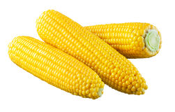 Corn. With clipping path Stock Images