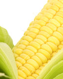 Corn Close Up. Corn Kernals Close up on a white background Royalty Free Stock Image