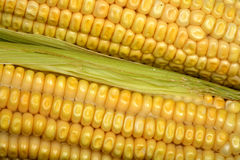 Corn close up Stock Photo