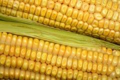 Corn close up Stock Photo