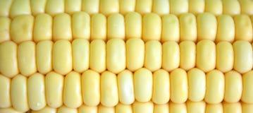 Corn close-up. Fresh corn in close-up view Stock Photo