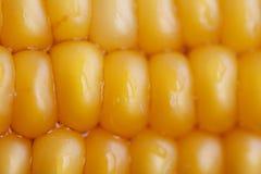 Corn close up Royalty Free Stock Image
