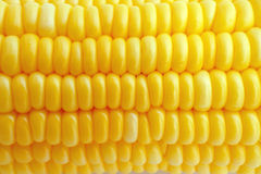 Corn in close up Stock Images