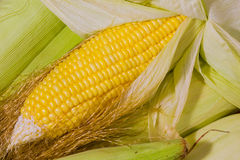 Corn Close Up Royalty Free Stock Photo