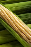 Corn. Close up of corn Royalty Free Stock Images