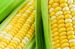 Corn close up Royalty Free Stock Photography