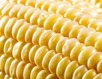Corn close up Stock Photography