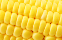 Corn close up Stock Photos