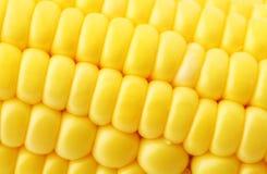Corn close up Stock Photos