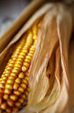 Corn close-up. Stock Images