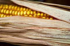 Corn close-up. Royalty Free Stock Photography