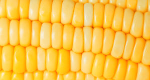 Corn closeup Royalty Free Stock Images
