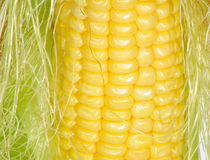 Corn closeup Stock Photos