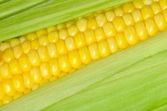 Corn closeup Royalty Free Stock Photography