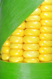 Corn closeup Royalty Free Stock Image