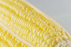 Corn closeup Stock Photography
