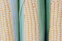 Corn. Stock Images