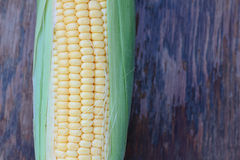 Corn. Stock Photography