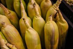 Corn closeup shot food fruits fr stock photography
