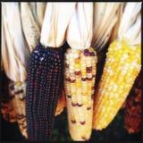 Corn closeup Stock Photo