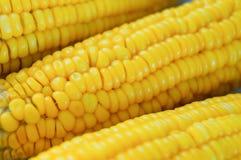 Corn closeup. A yellow sweet corn closeup Stock Photography
